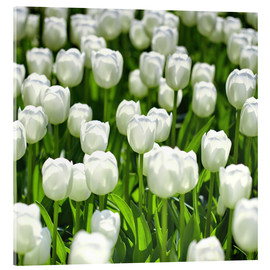 Acrylic print  Meadow of tulips - pixelliebe