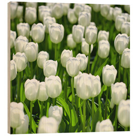 Wood print  Meadow of tulips - pixelliebe