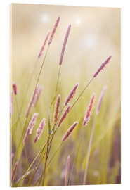Acrylic glass  grasses - Bieberchen
