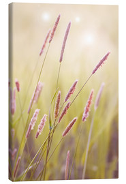 Canvas print  grasses - Bieberchen
