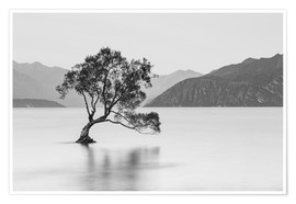 Premium poster Lone Tree / black & white