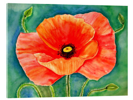 Acrylic print  Big poppy flower - siegfried2838