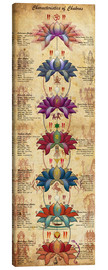 Canvas print  Characterstics of Chakras Yoga Poster - Sharma Satyakam