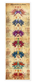 Premium poster Characterstics of Chakras Yoga Poster