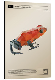 Aluminium print  fig5 Polygonfrosch Poster - Labelizer
