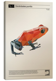 Canvas print  fig5 Polygonfrosch Poster - Labelizer