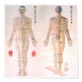 Premium poster  Acupuncture map of the male body