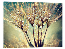 Acrylic glass  Dandelion abstract - Julia Delgado