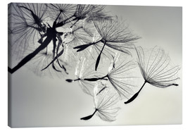 Canvas print  Dandelion freedom - Julia Delgado