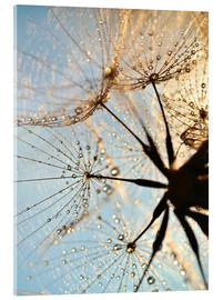 Acrylic glass  Look at dandelion from below - Julia Delgado