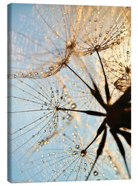 Canvas print  Look at dandelion from below - Julia Delgado