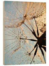 Wood print  Look at dandelion from below - Julia Delgado