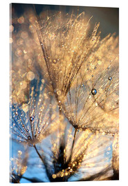 Acrylic print  Dandelion at the blue hour - Julia Delgado