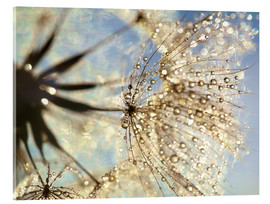 Acrylic print  Dandelion magic of nature - Julia Delgado