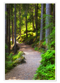 Premium poster  Forest path - Thomas Herzog