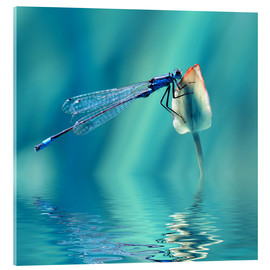 Acrylic print  Dragonfly with Reflection - Atteloi