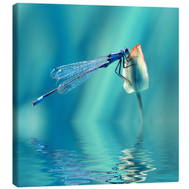 Canvas print  Dragonfly with Reflection - Atteloi