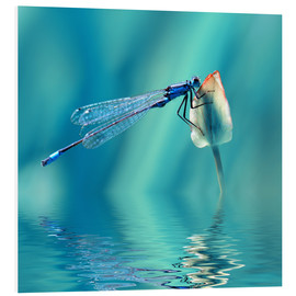 Foam board print  Dragonfly with Reflection - Atteloi