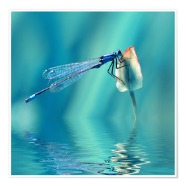 Atteloi - Dragonfly with Reflection