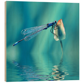 Wood print  Dragonfly with Reflection - Atteloi