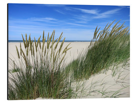 Aluminium print  thriving beach grass in the dunes - Susanne Herppich