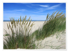 Premium poster  thriving beach grass in the dunes - Susanne Herppich