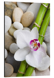 Alu-Dibond  Bamboo and orchid - Andrea Haase Foto