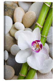Canvas print  Bamboo and orchid - Andrea Haase Foto
