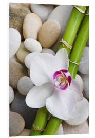 Foam board print  Bamboo and orchid - Andrea Haase Foto