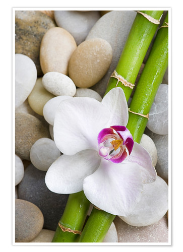 Premium poster Bamboo and orchid