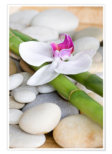 Premium poster Bamboo and orchid II