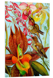 Foam board print  Exotic Birds on Orchids
