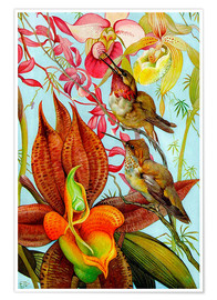 Poster  Exotic birds on orchids