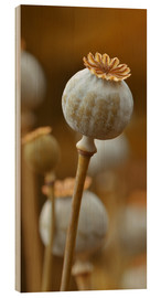 Wood print  Poppy - Atteloi
