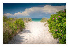 Premium poster Path through dunes of baltic sea
