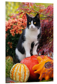 Foam board print  Tuxedo cat on colourful pumkins in a garden - Katho Menden