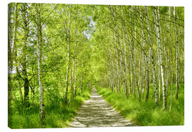 Canvas print  Birch forest - Atteloi