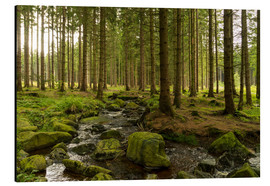 Aluminium print  forest with creek - Oliver Henze