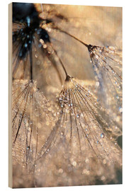 Wood print  Dew on a dandelion - Julia Delgado