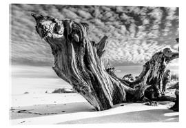 Acrylic glass  Old tree root on the beach (monochrome) - Sascha Kilmer