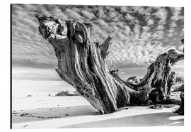 Aluminium print  Old tree root on the beach (monochrome) - Sascha Kilmer