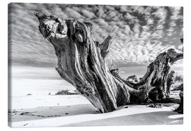 Canvas print  Old tree root on the beach (monochrome) - Sascha Kilmer