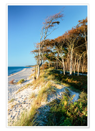 Premium poster Baltic Sea beach with trees