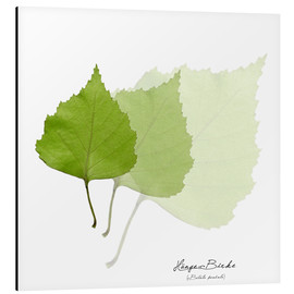 Aluminium print  Collage with leaves of the birch - Christian Müringer