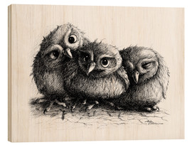 Wood print  Three young owls - owlets - Stefan Kahlhammer