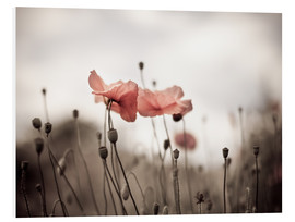 Foam board print  Poppies 03 - Nailia Schwarz