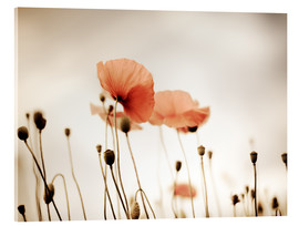 Acrylic print  Red Poppy Dream - Nailia Schwarz