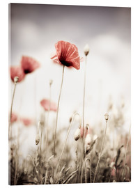 Acrylic print  Red Poppy Flowers - Nailia Schwarz
