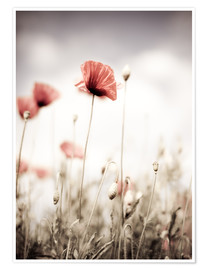 Premium poster Red Poppy Flowers
