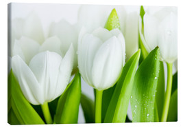 Canvas  White Tulips 04 - Nailia Schwarz